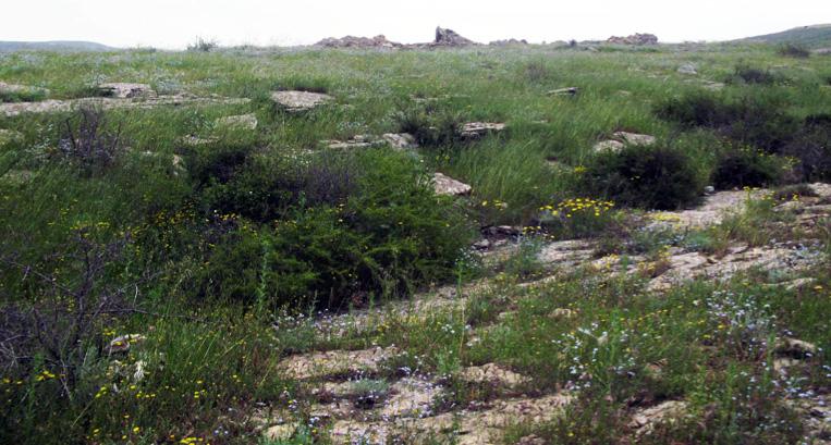 Quru dağ-bozqır bitkilik tipi
