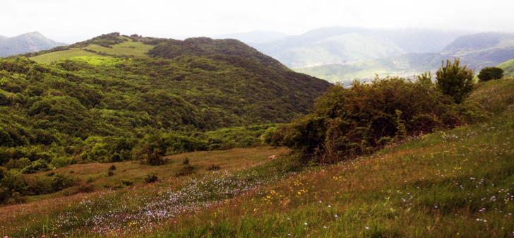 Yüksək dağ meşələri və alp çəmənlikləri