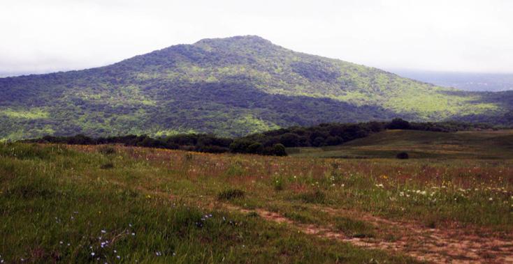 Meşədən sonra əmələ gələn – mezofil təmaüllü taxıllı-cilli-müxtəlifotlu çəmənlər